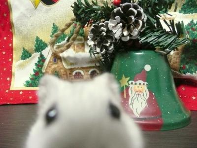 Christmas_0261