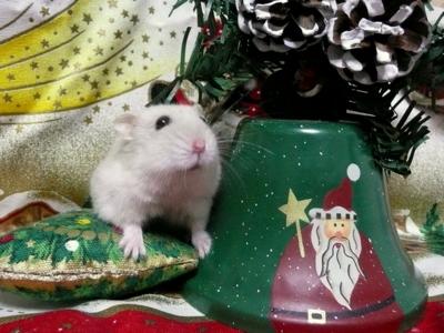 Christmas_2_0151