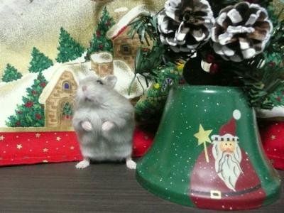 Christmas_hanon2