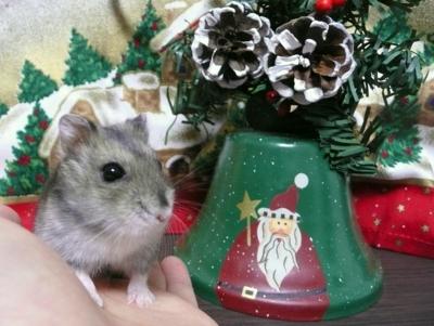 Christmas_marron1