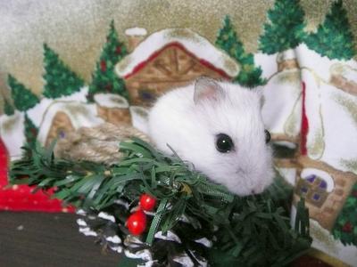 Christmas_ribon3