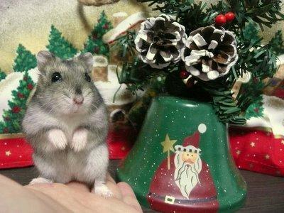 Christmas_0121
