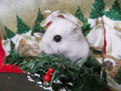 Christmas_0321