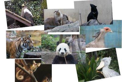 20110807_tama_zoo_8