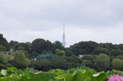 Ueno_zoo_721_2051