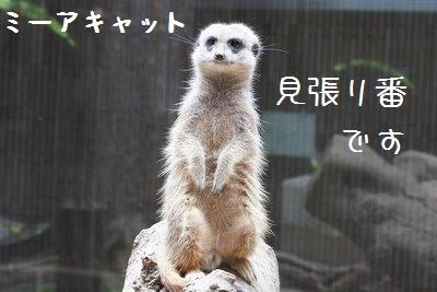 Ueno_zoo_1_2