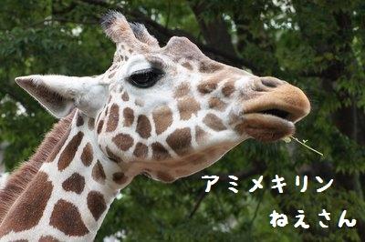 Ueno_zoo_1_3