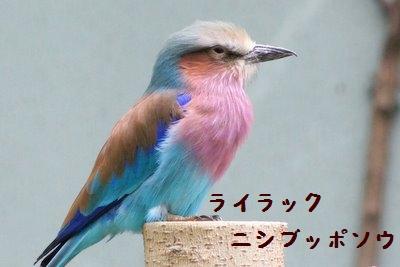 Ueno_zoo_1_4