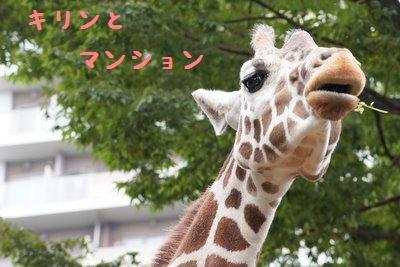 Ueno_zoo_2_3