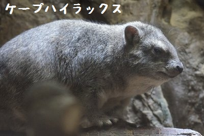 Ueno_zoo_2_4