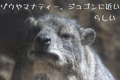 Ueno_zoo_3