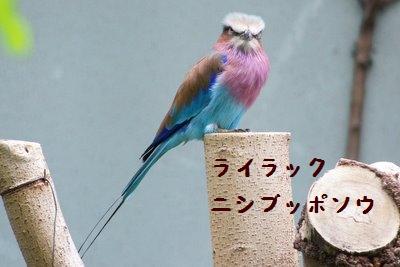 Ueno_zoo_72