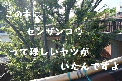 Ueno_zoo__2