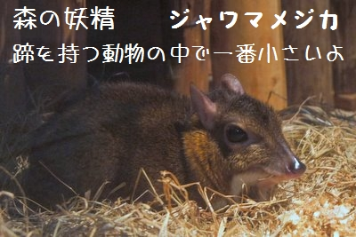 Ueno_zoo__3