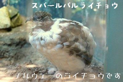 Ueno_zoo__7