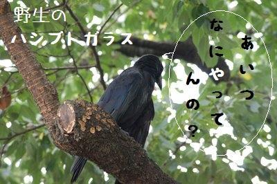 Ueno_zoo__8