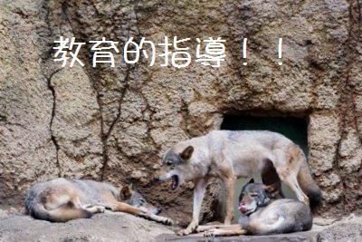 Tama_zoo_1