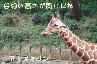 Tama_zoo_1_2