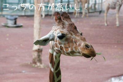 Tama_zoo_2_2