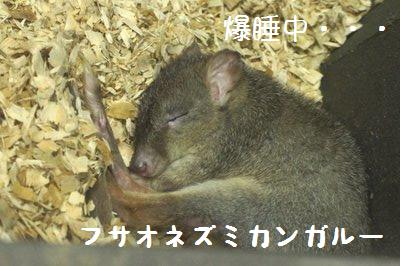 Tama_zoo_