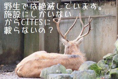 Tama_zoo_2