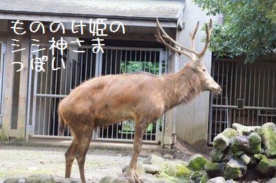 Tama_zoo_3