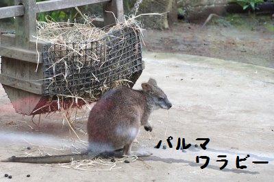 Tama_zoo__3