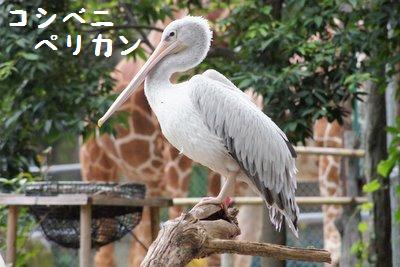 Tama_zoo__2