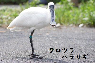 Tama_zoo__4