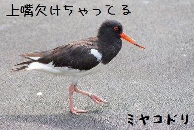 Tama_zoo__5