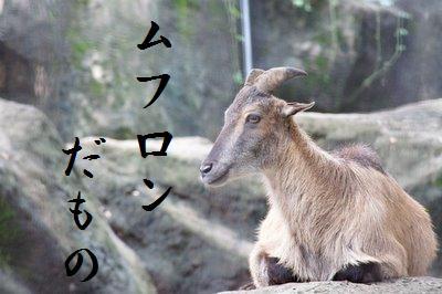 Tama_zoo__6