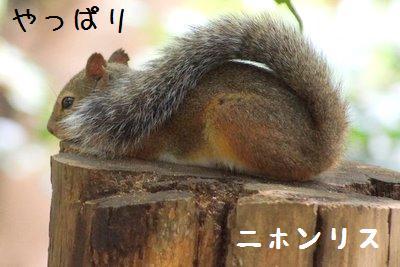 Inokashira_zo_