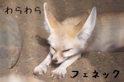 Inokashira_zoo_1881