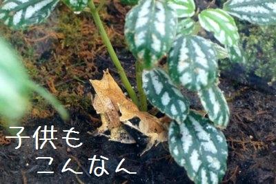 Maruyama_zoo_
