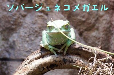 Maruyama_zoo_1