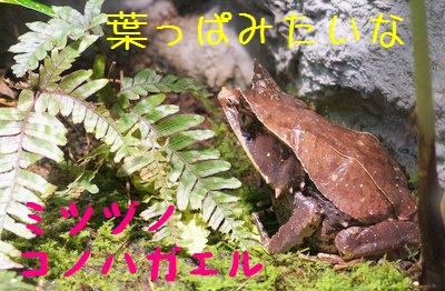 Maruyama_zoo_1_2