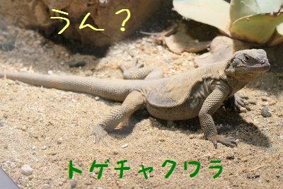 Maruyama_zoo_1_3