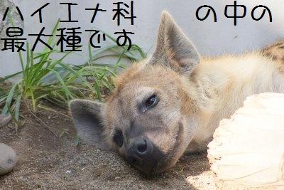 Maruyama_zoo_2_2