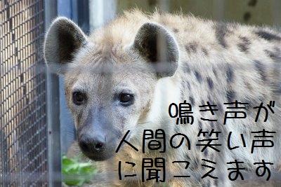 Maruyama_zoo_3
